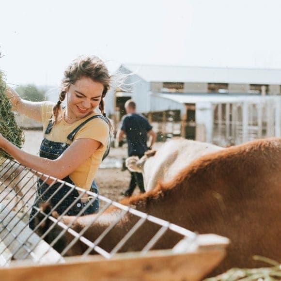 animals-blond-hair-cattle-1881334
